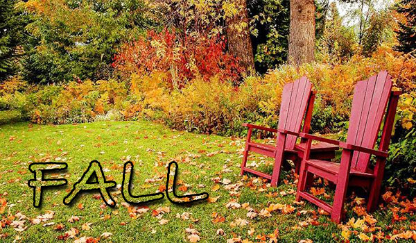 Lawn care in Fall image