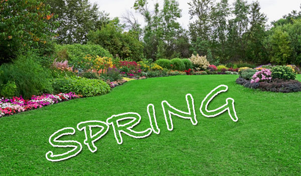 Lawn care in Spring image
