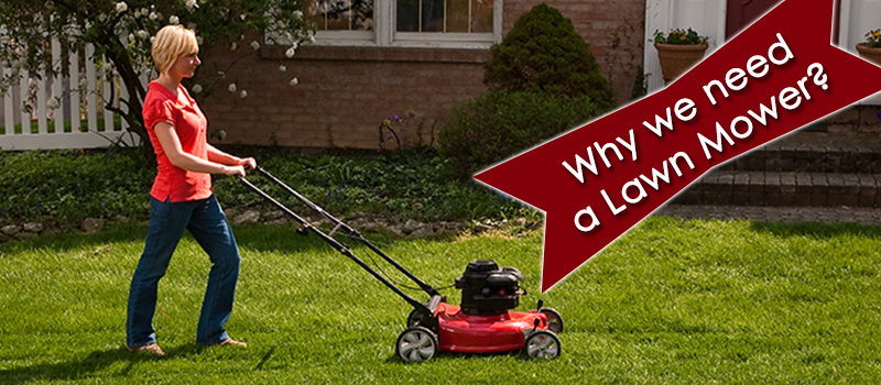 reasons for mowing lawn image