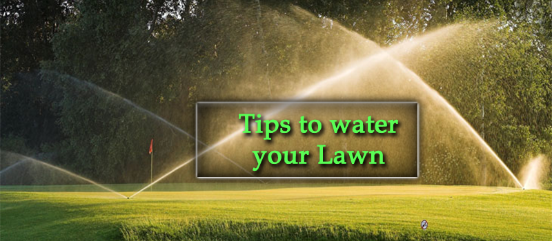 How to Water your Lawn Image