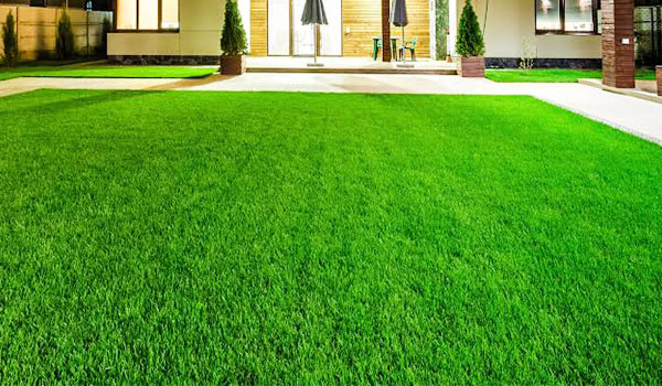Spring Lawn Feed & Care image