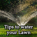 Tips-to-water-your-Lawn-Image