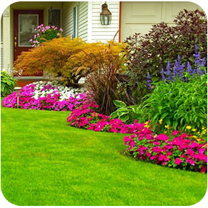 You can make your lawn look beautiful image