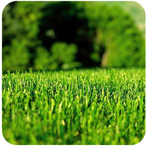 grass healthy image
