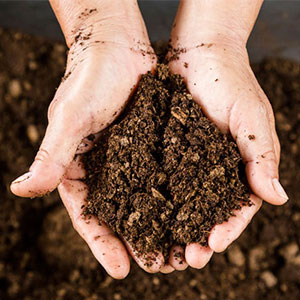 healthy soil image