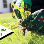 How to get rid of weeds image