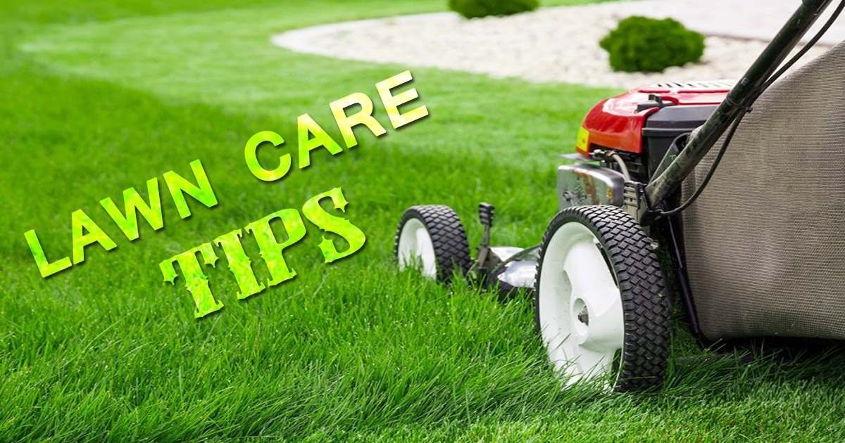 Lawn Care Tips image