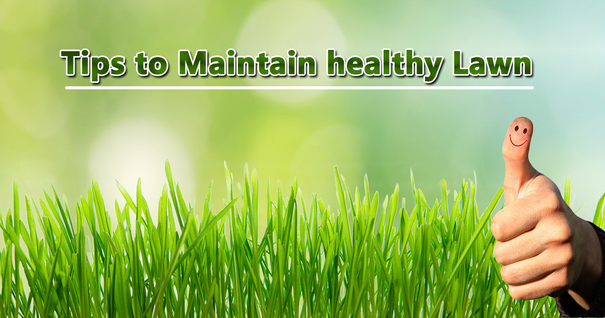Tips to maintain Healthy Lawn image