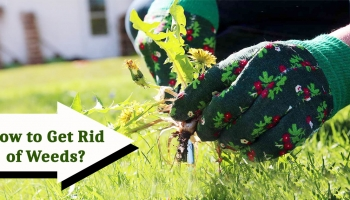 What are weeds & How to control them? – Follow Simple Tips & get rid of Weeds
