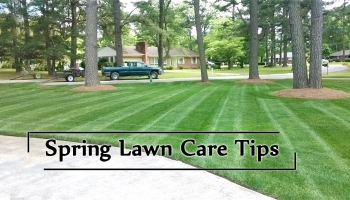Tips to take care of Lawn in Spring