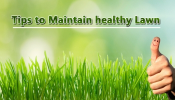 How to maintain Healthy Lawn? – Simple Tips for your Lawn Maintenance