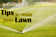 How to Water your Lawn? – Tips & Smart Way to water Lawn